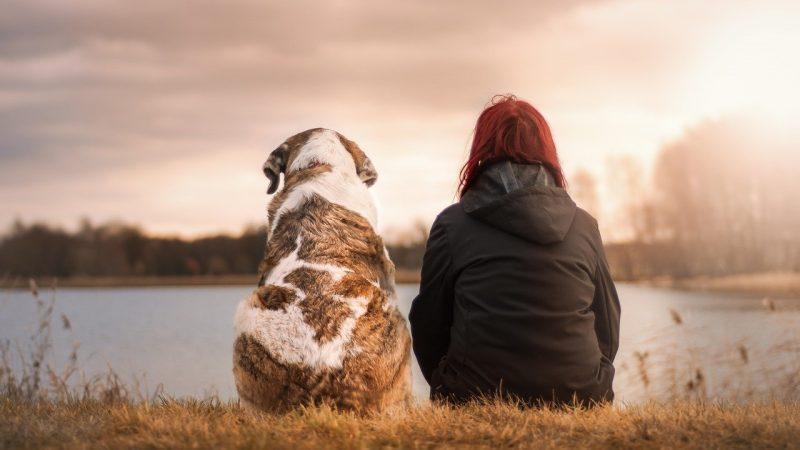 Δημοσιεύθηκε το ΦΕΚ για το νέο πλαίσιο που αφορά τα ζώα συντροφιάς – righter.gr